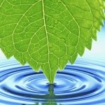 Green Leaf Wallpapers 7